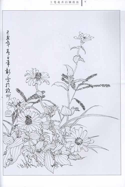 工笔简单白描花卉-工笔花卉白描技法