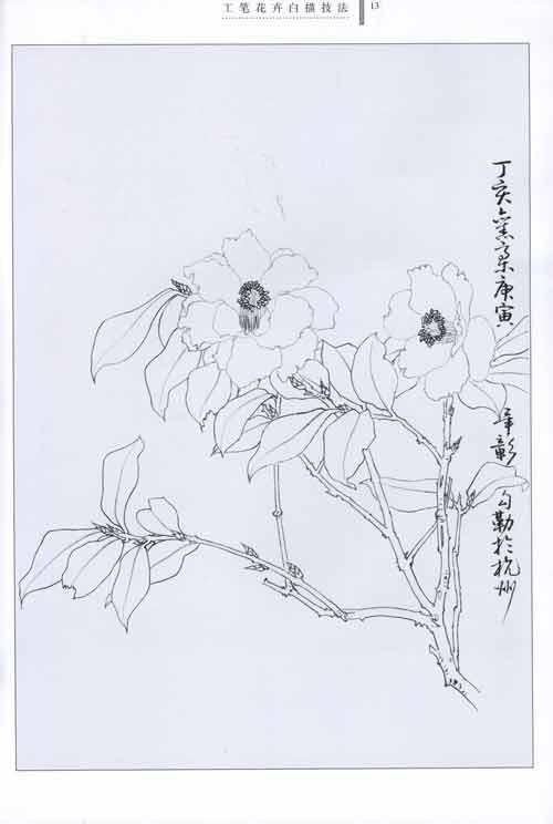 工笔花卉白描技法 毕彰 技法教程 文轩网