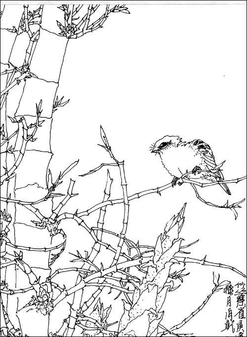 竹黑白线条手绘