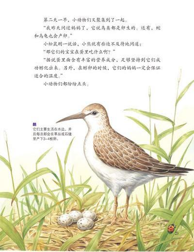 各种生蛋动物的图片