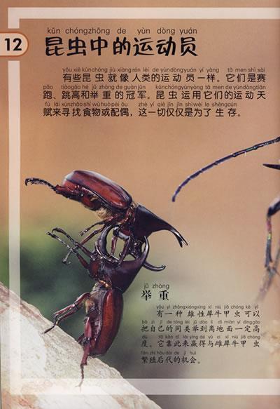 昆虫世界/动物百科