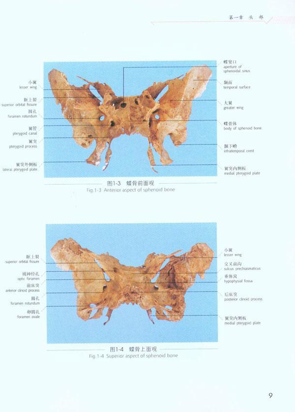 颅顶区的软组织层次 第三节颅底结构