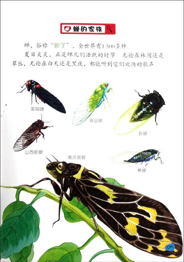 蝉 神马卡通 少儿 书籍     目录  蝉的家族  蝉的身体结构  天才音乐