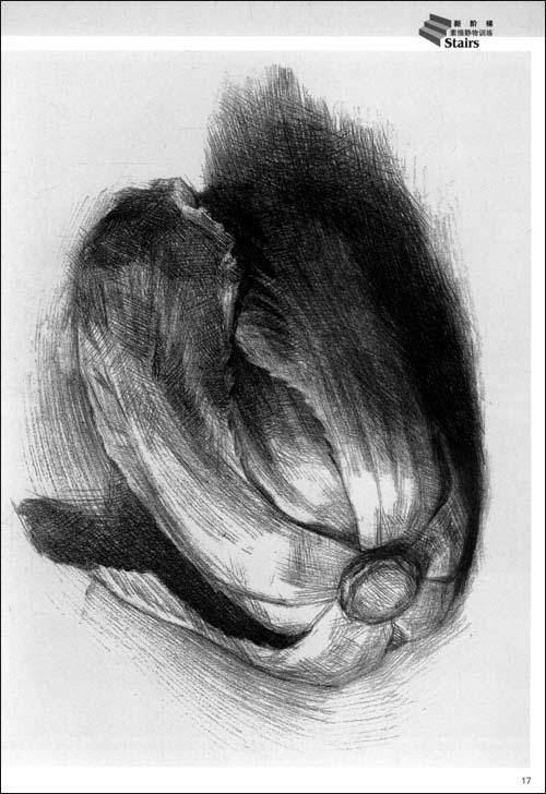 第三章素描单个物体写生 一,单个苹果的写生方法 二,单个梨的写生方法