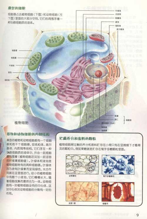 植物细胞与生长 2根与茎