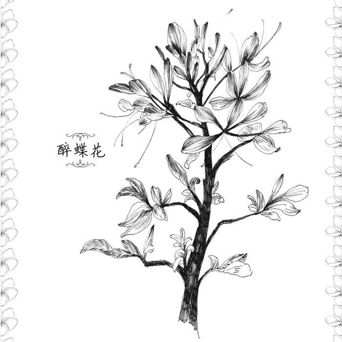 金鱼黑白手绘插画_手绘