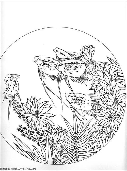 彩铅手绘孔雀鱼