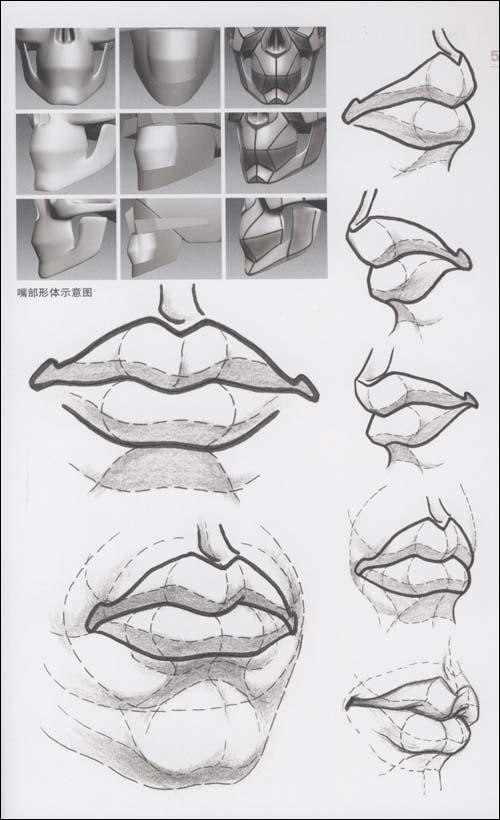 嘴部结构素描表现 嘴部的结构与光影