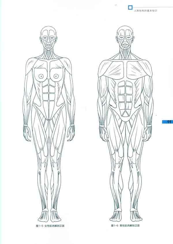 服装效果图人体表现技法
