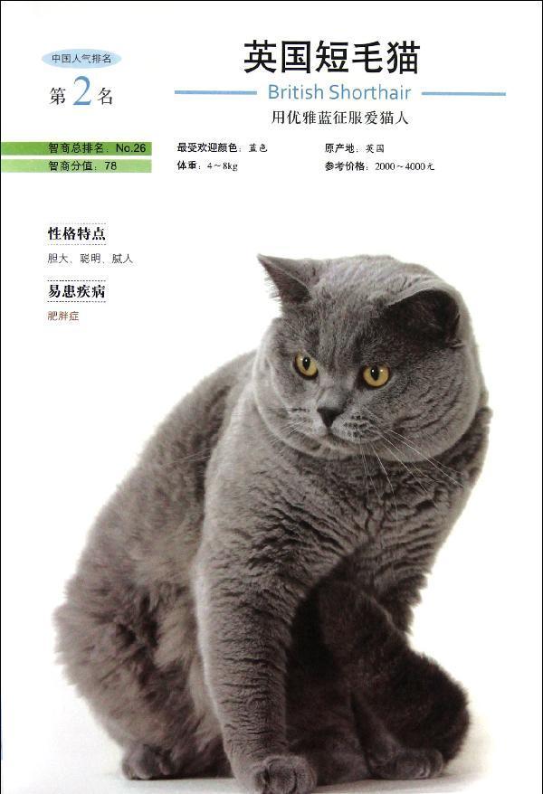 波米拉猫/120  猫咪里面的文艺小清新  奥西猫/122  大型猫科动物