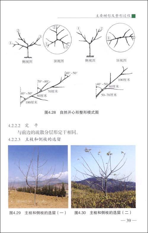 核桃樹的整形修剪其功效