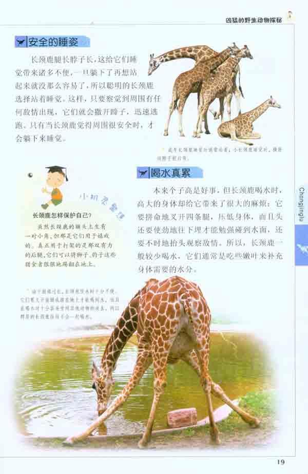 动物——长颈鹿 暴躁的草原居民——非洲野牛 河中之王——河马 沙漠