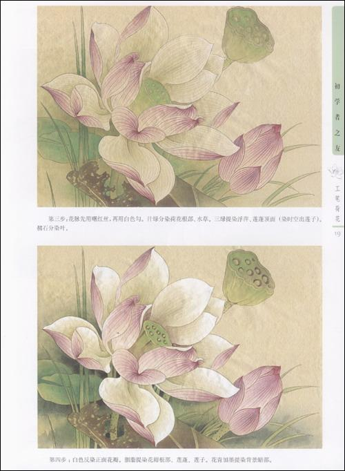 初学者之友工笔荷花-姜冬莲