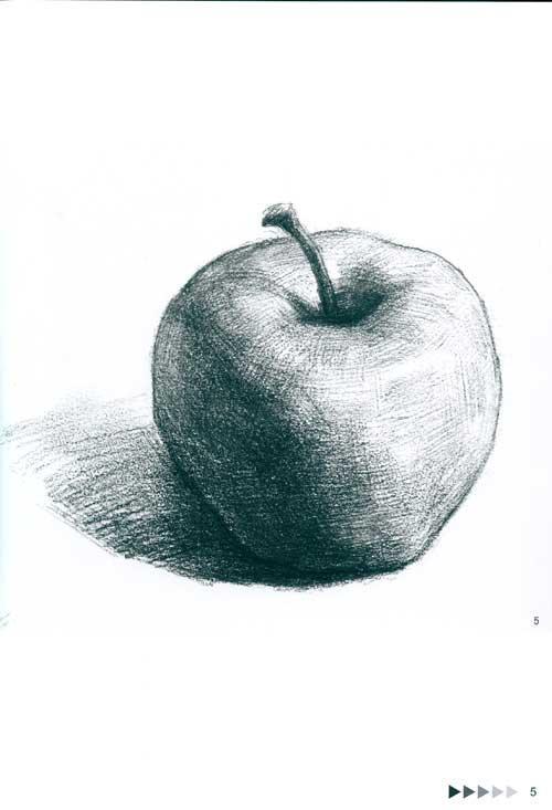 单个静物的多角度表现 素描蔬果图片