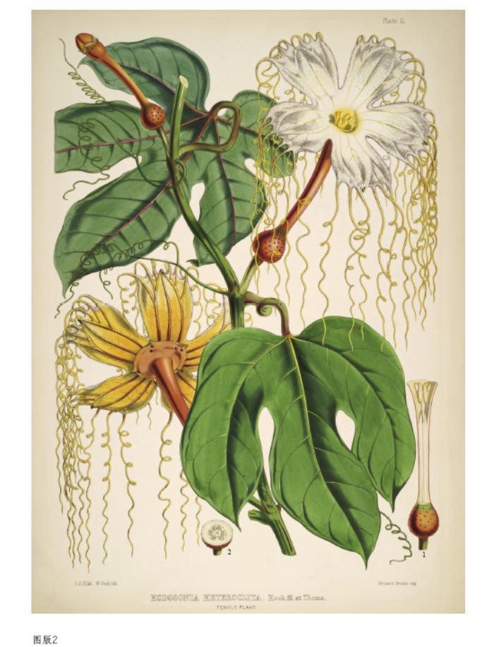 科普读物 生物世界 手绘喜马拉雅植物 艺术 书籍